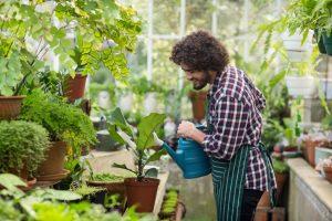 Man taking care of his indoor garden